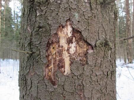 Какой антисептик для дерева лучше?