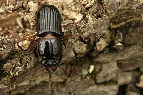 Как и чем уничтожить жуков вредителей в срубе? Какой пропиткой?