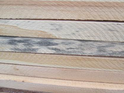 Чем отбелить (удалить) синеву с древесины?